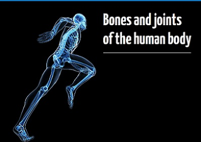 Bones and Joints of the Human Body