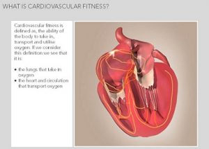 Principles of muscular and cardiovascular fitness