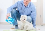 Pet Nurtition Online Course