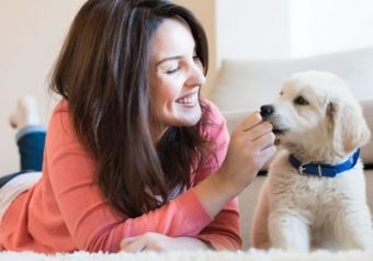 Pet Psychology Diploma Online Course
